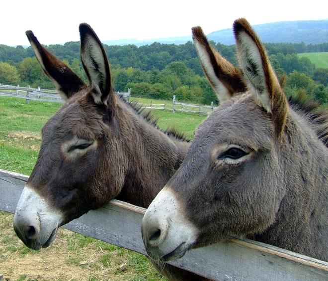 ¿Montamos en burro? @travelsadaptado