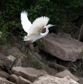 descensos-ornitologicos