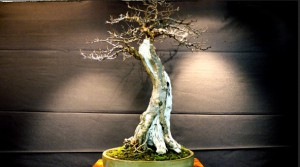 museo jardin bonsai1