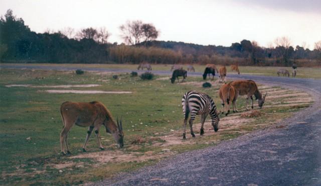 Escapada Accesible a Perpignan y a la Reserva africana de Sigean @travelsadaptado